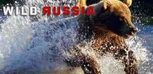 Kinn az orosz vadonban - Orosz természetfilm sorozat
